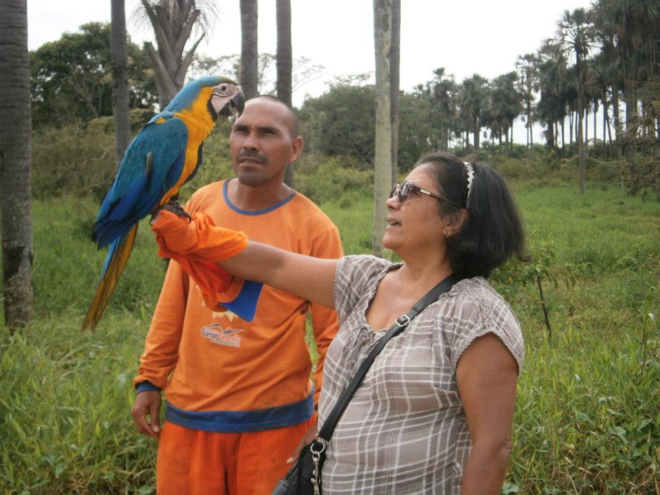 Você está navegando a partir de imagens do artigo: A Arara Canindé...
